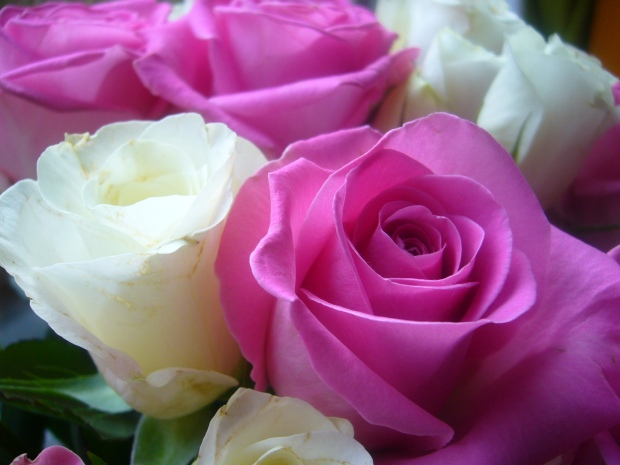 For my readers - if I could send you all a bunch of flowers, I would :)